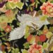1128BR Gold CRANE japanese pattern cotton wholesale fabric bird 36M(Sevenberry)